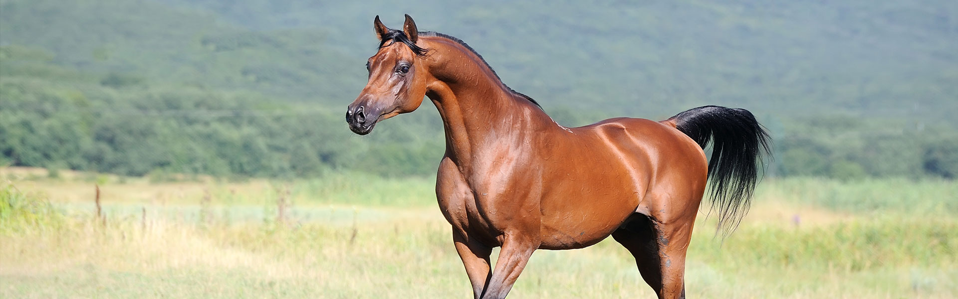 Paardfit.nl